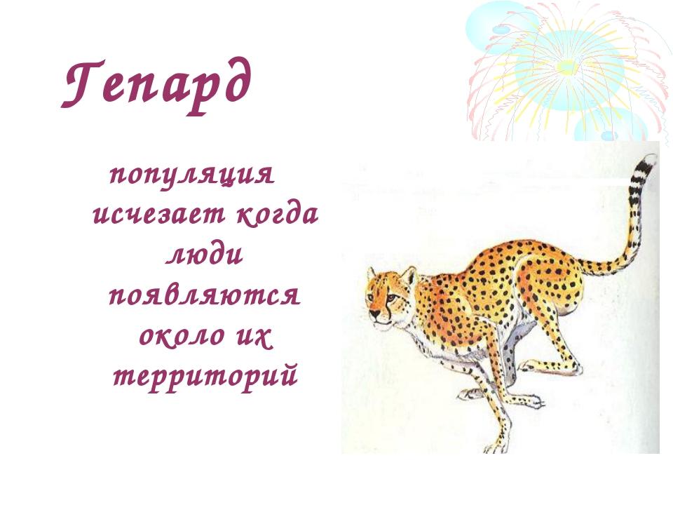 Гепард популяция исчезает когда люди появляются около их территорий
