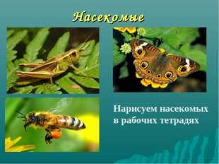Насекомые Нарисуем насекомых в рабочих тетрадях