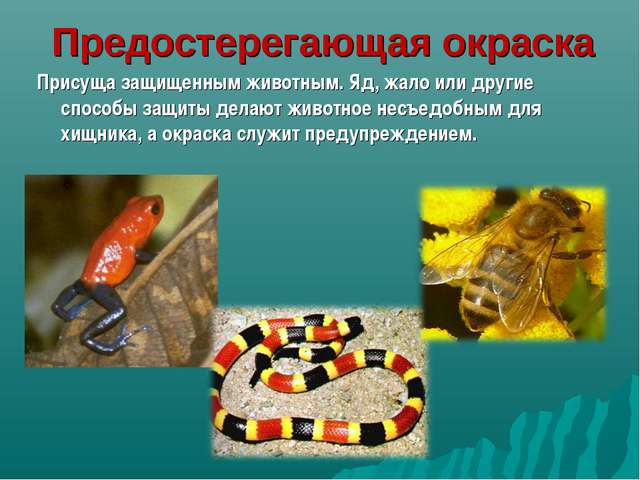 Предостерегающая окраска Присуща защищенным животным. Яд, жало или другие спо...