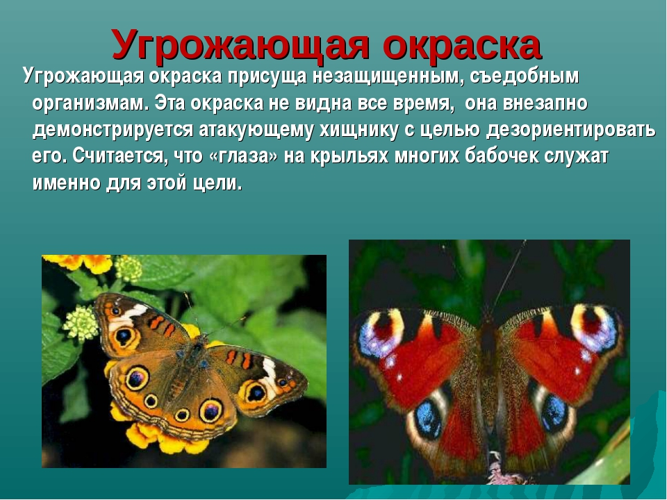 Угрожающая окраска Угрожающая окраска присуща незащищенным, съедобным организ...