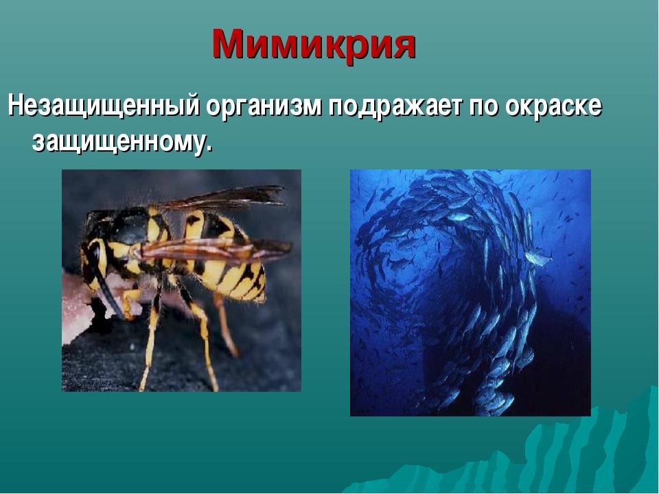 Мимикрия Незащищенный организм подражает по окраске защищенному.