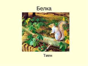 Белка Тиен