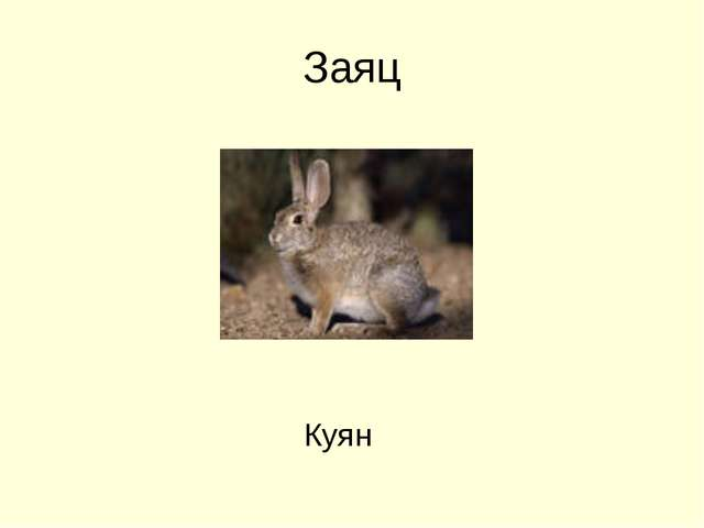 Заяц Куян