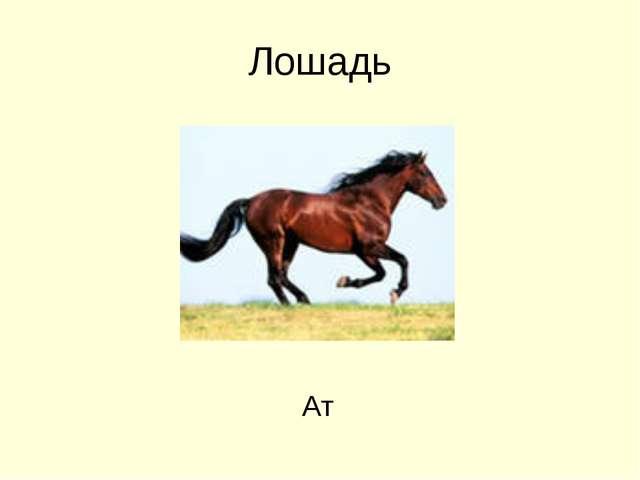Лошадь Ат