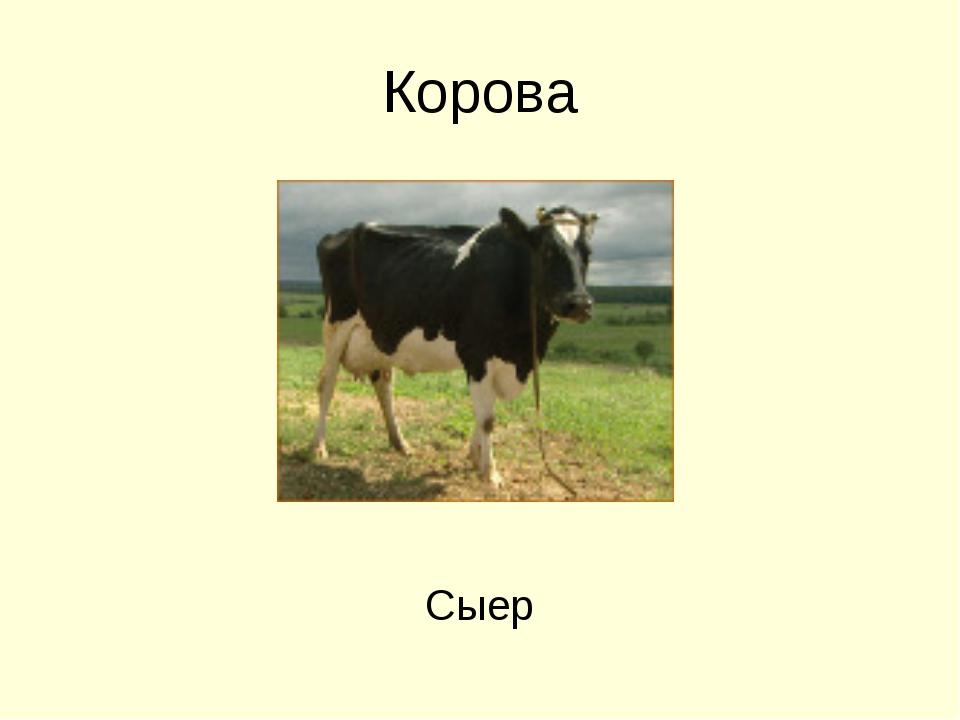 Корова Сыер