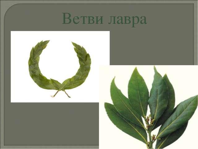 Ветви лавра