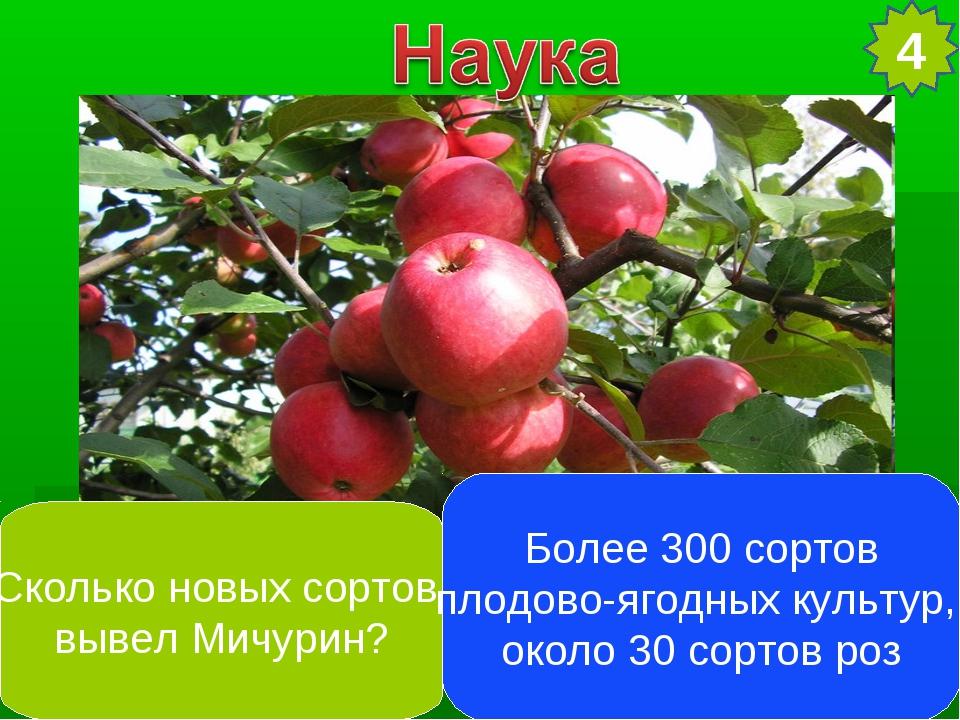 4 Сколько новых сортов вывел Мичурин? Более 300 сортов плодово-ягодных культу...