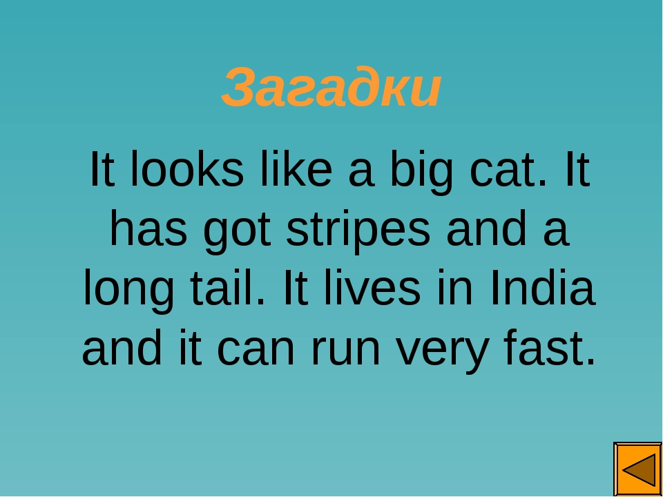Загадки It looks like a big cat. It has got stripes and a long tail. It live...
