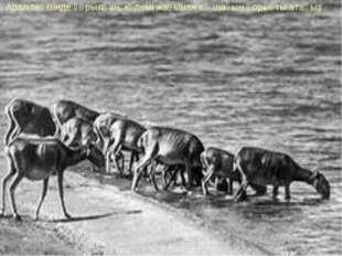 7. Арал теңізінде құрылған, көлемі жағынан ең шағын қорықты атаңыз
