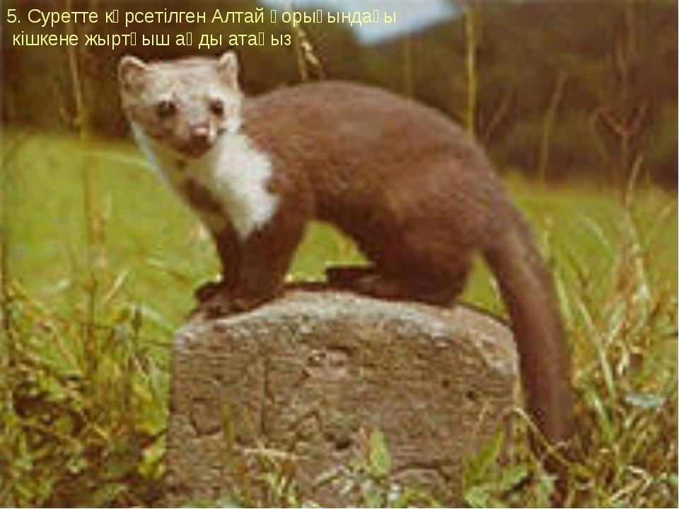 5. Суретте көрсетілген Алтай қорығындағы кішкене жыртқыш аңды атаңыз