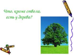 Что, кроме ствола, есть у дерева?