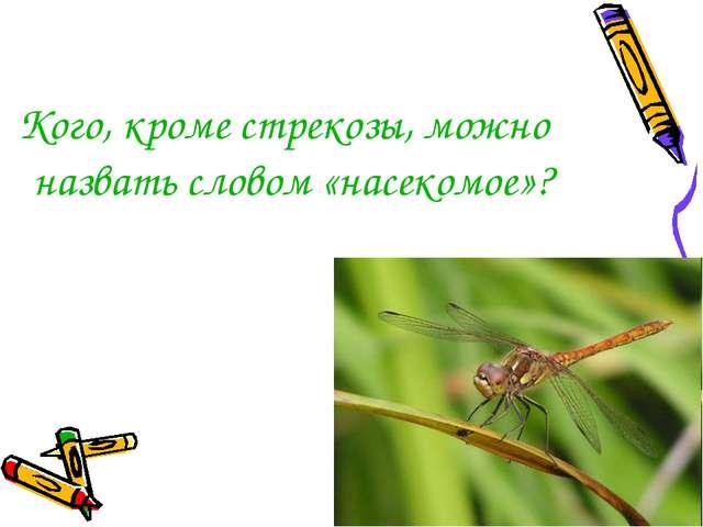 Кого, кроме стрекозы, можно назвать словом «насекомое»?