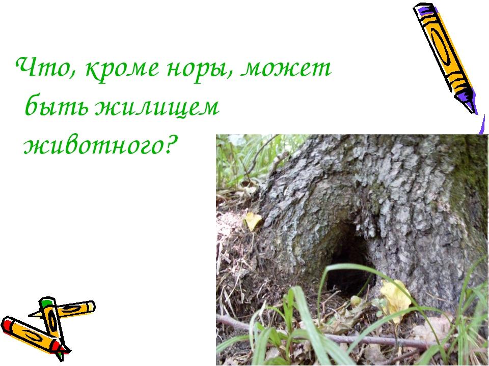 Что, кроме норы, может быть жилищем животного?