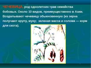 ЧЕЧЕВИЦА, род однолетних трав семейства бобовых. Около 10 видов, преимуществе