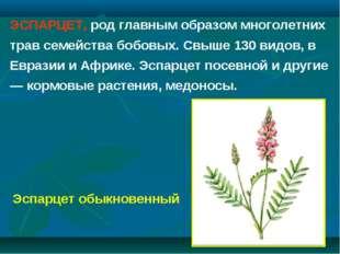 ЭСПАРЦЕТ, род главным образом многолетних трав семейства бобовых. Свыше 130 в