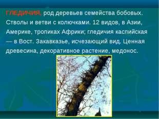 ГЛЕДИЧИЯ, род деревьев семейства бобовых. Стволы и ветви с колючками. 12 видо
