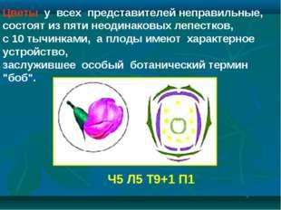 Цветы у всех представителей неправильные, состоят из пяти неодинаковых леп