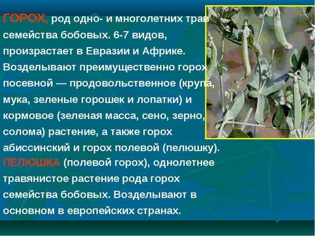 ПЕЛЮШКА (полевой горох), однолетнее травянистое растение рода горох семейства...