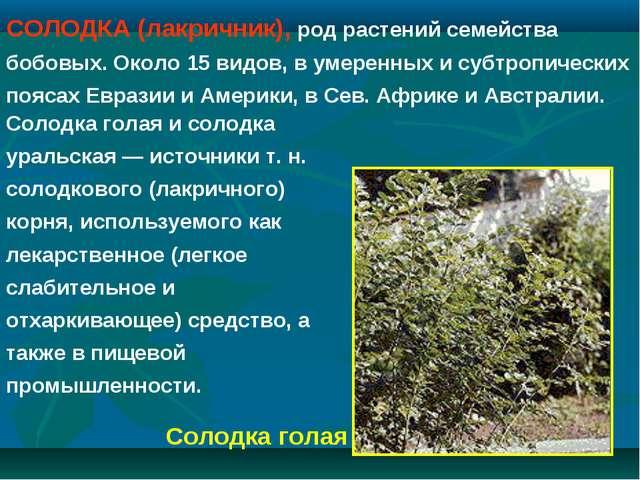 СОЛОДКА (лакричник), род растений семейства бобовых. Около 15 видов, в умерен...