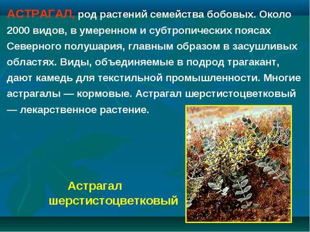 АСТРАГАЛ, род растений семейства бобовых. Около 2000 видов, в умеренном и суб...