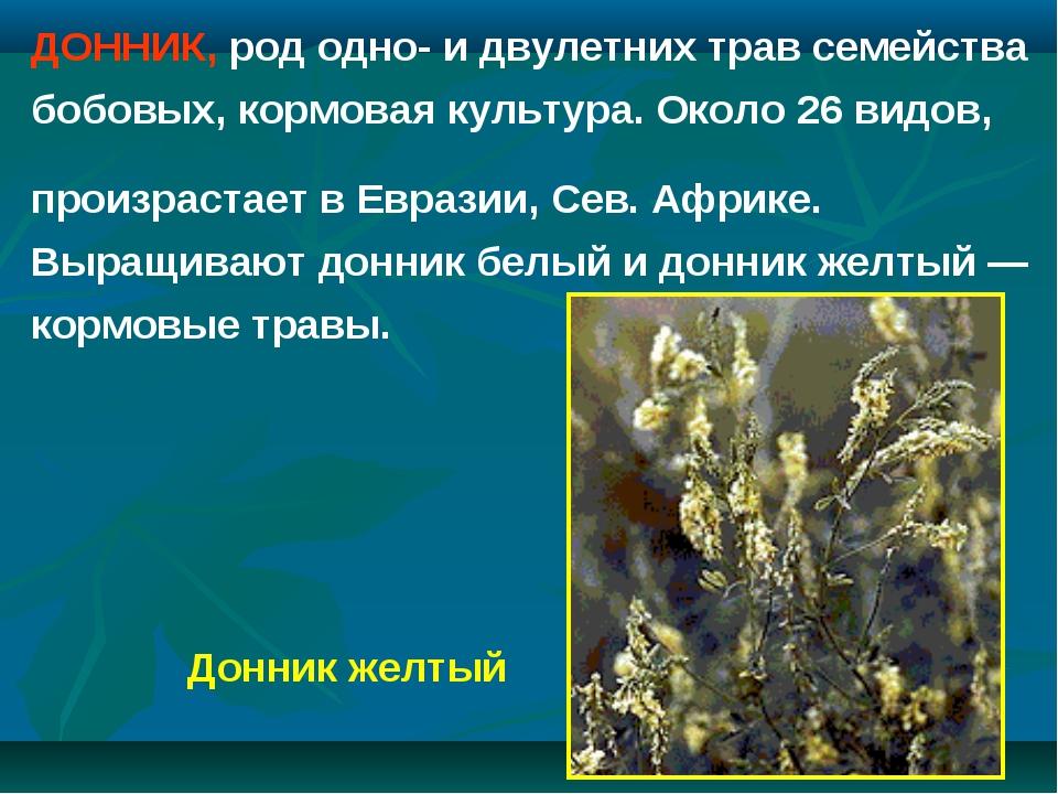 ДОННИК, род одно- и двулетних трав семейства бобовых, кормовая культура. Окол...