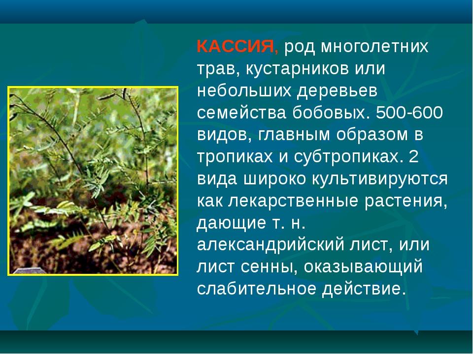 КАССИЯ, род многолетних трав, кустарников или небольших деревьев семейства бо...