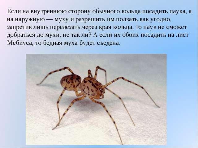 Если на внутреннюю сторону обычного кольца посадить паука, а на наружную — му...