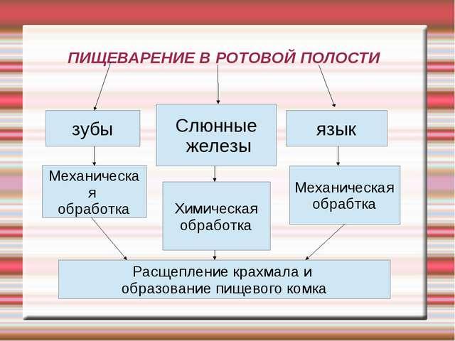 ПИЩЕВАРЕНИЕ В РОТОВОЙ ПОЛОСТИ зубы Слюнные железы язык Механическая обработка...