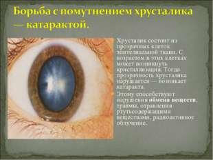 Хрусталик состоит из прозрачных клеток эпителиальной ткани. С возрастом в эти