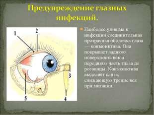 Наиболее уязвима к инфекции соединительная прозрачная оболочка глаза — конъюн