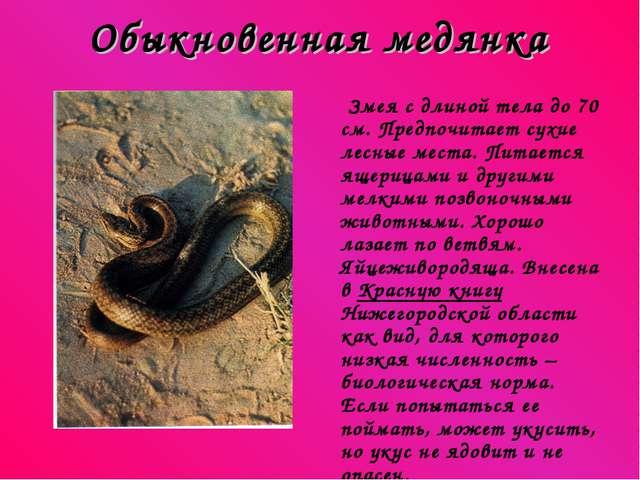 Обыкновенная медянка Змея с длиной тела до 70 см. Предпочитает сухие лесные м...