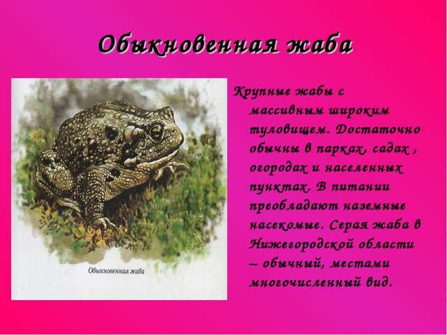 Обыкновенная жаба Крупные жабы с массивным широким туловищем. Достаточно обыч...