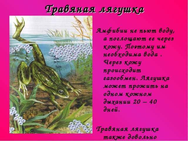 Травяная лягушка Амфибии не пьют воду, а поглощают ее через кожу. Поэтому им...