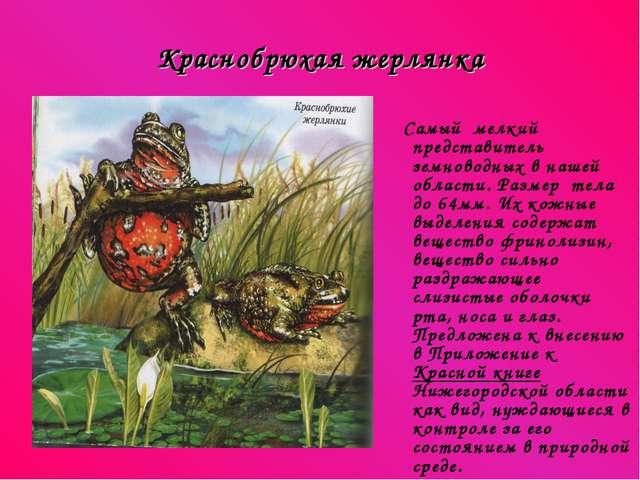 Краснобрюхая жерлянка Самый мелкий представитель земноводных в нашей области....