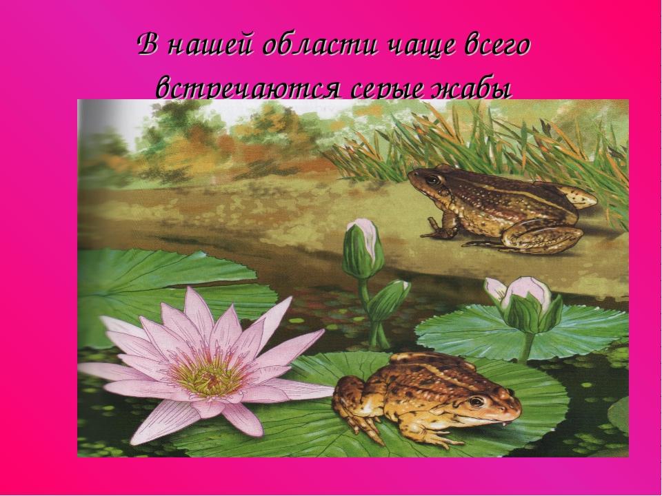 В нашей области чаще всего встречаются серые жабы