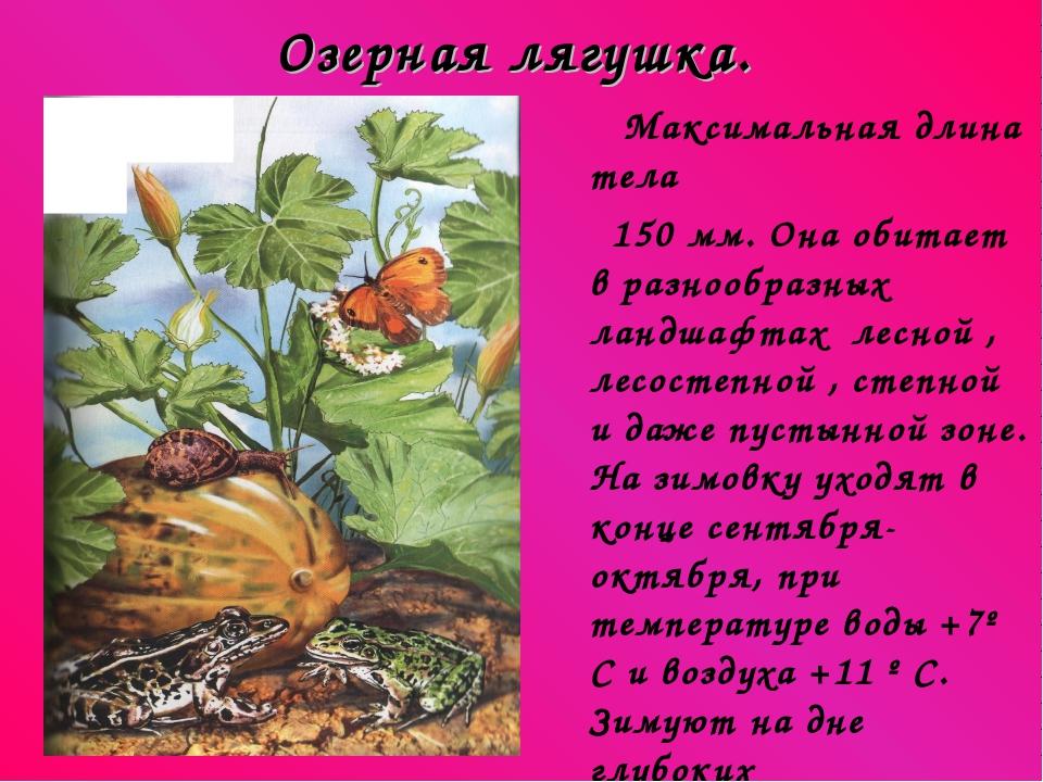 Озерная лягушка. Максимальная длина тела 150 мм. Она обитает в разнообразных...