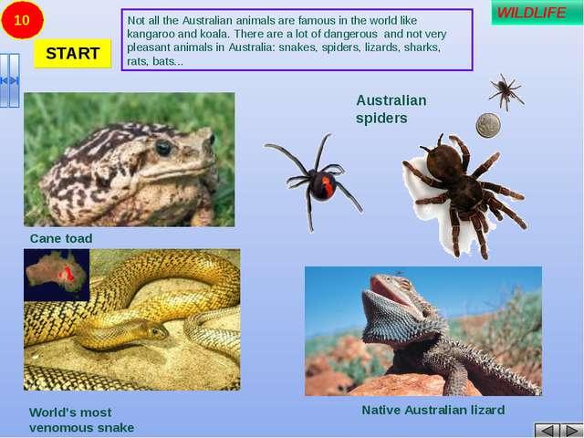 10 Cane toad Rabbit Native Australian lizard Australian spiders World's most...