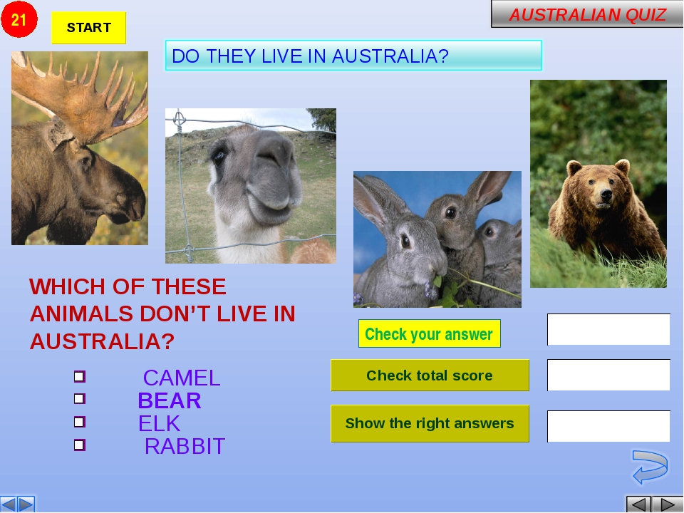 Check your answer WHICH OF THESE ANIMALS DON'T LIVE IN AUSTRALIA? CAMEL BEAR...