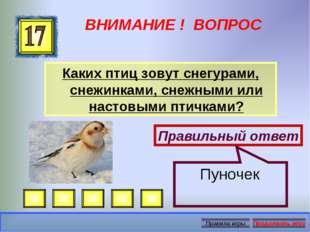 ВНИМАНИЕ ! ВОПРОС Каких птиц зовут снегурами, снежинками, снежными или настов