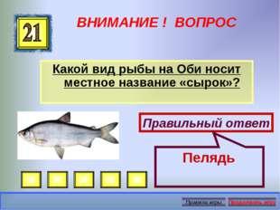 ВНИМАНИЕ ! ВОПРОС Какой вид рыбы на Оби носит местное название «сырок»? Прави