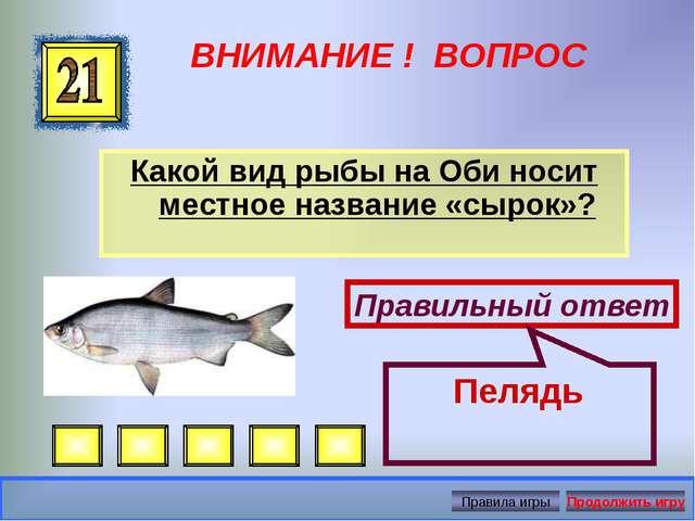 ВНИМАНИЕ ! ВОПРОС Какой вид рыбы на Оби носит местное название «сырок»? Прави...