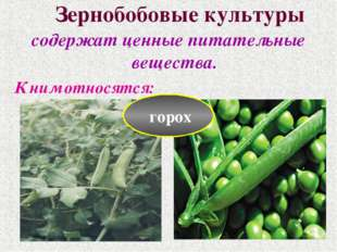 Зернобобовые культуры содержат ценные питательные вещества. К ним относятся: