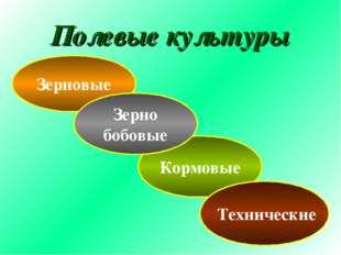 Полевые культуры Зерновые Кормовые Технические Зерно бобовые