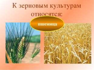 К зерновым культурам относятся: пшеница