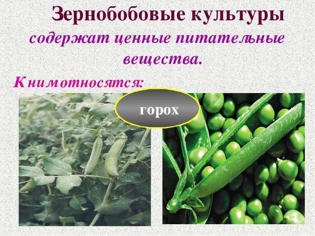 Зернобобовые культуры содержат ценные питательные вещества. К ним относятся:...