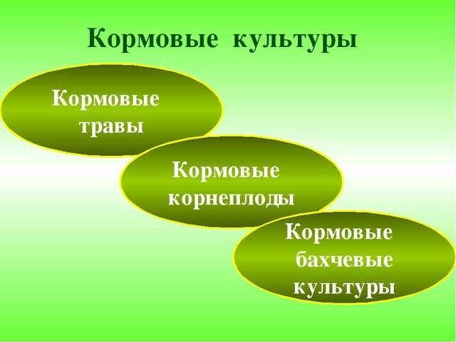 Кормовые культуры Кормовые травы Кормовые корнеплоды Кормовые бахчевые культуры