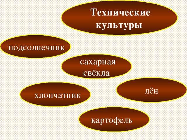 Технические культуры подсолнечник сахарная свёкла картофель хлопчатник лён