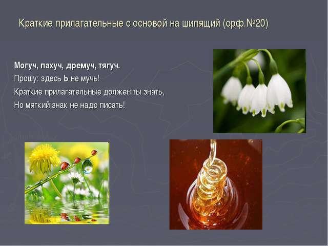 Краткие прилагательные с основой на шипящий (орф.№20) Могуч, пахуч, дрему...