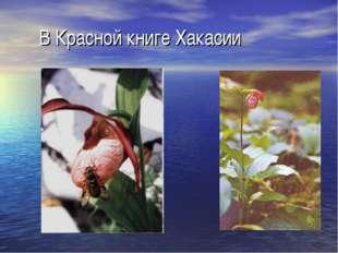 В Красной книге Хакасии