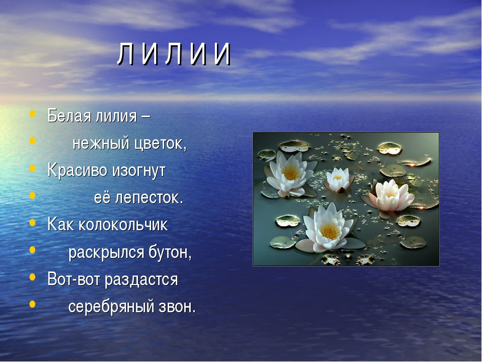 Л И Л И И Белая лилия – нежный цветок, Красиво изогнут её лепесток. Как коло...